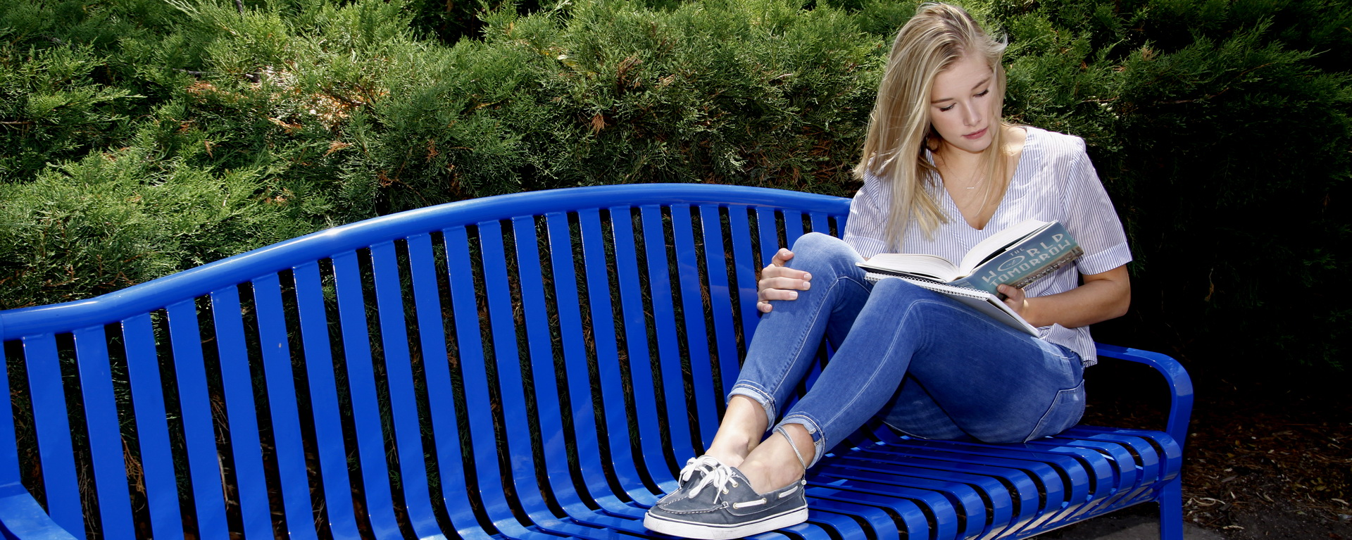 Student reading on a blue bench